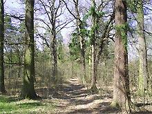 Stare Strącze - alejka w parku